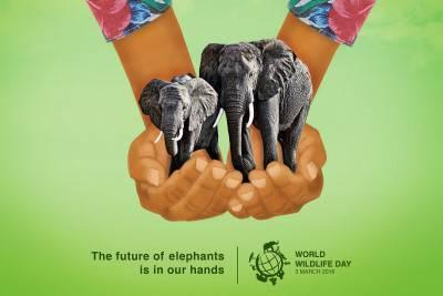 World Wildlife Day, locandina