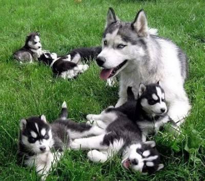 formazione cucciolo cane