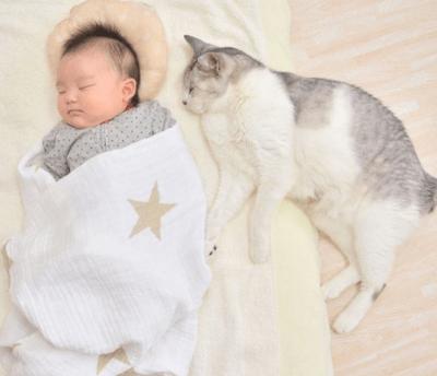 neonato gatto