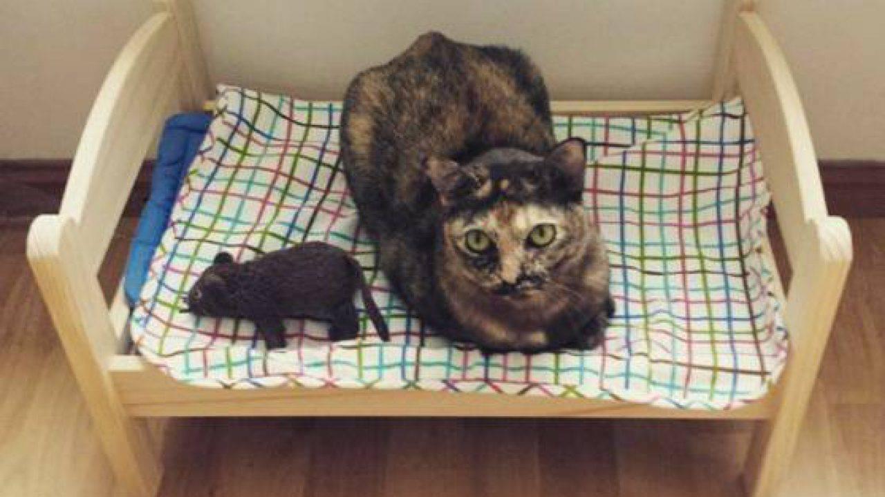Cuccia Gatto Fai Da Te i lettini delle bambole ideali come cucce per i gatti di