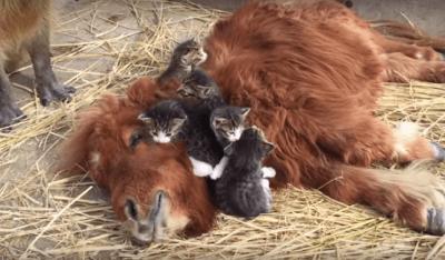 amore animali