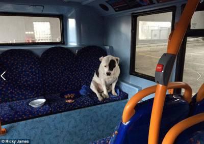 cane bus