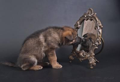 I cani riconoscono la propria immagine allo specchio - Cane allo specchio ...