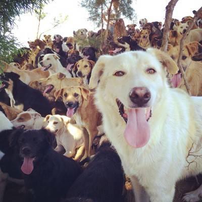 cani costa rica 1c