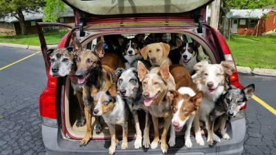 carico cani 3