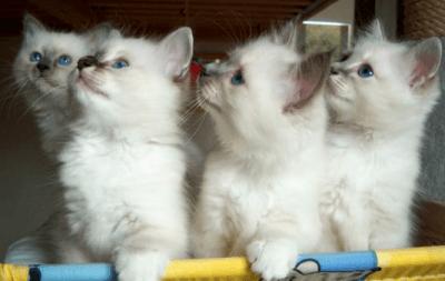 cuccioli gatti 3