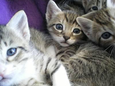 cuccioli gatti
