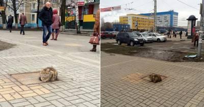 gatto abbandonato russia