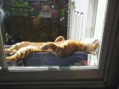 gatto caldo2