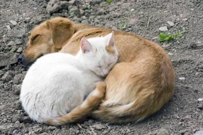 gatto cane 29