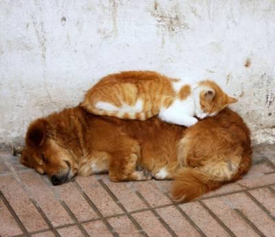 gatto cane7