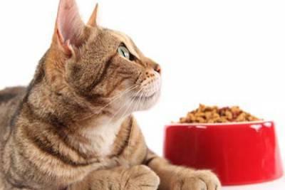 cibo gatto