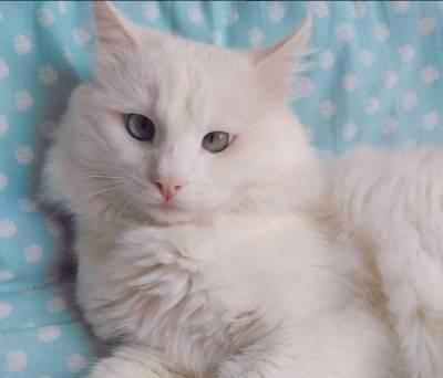 gatto occhi 4