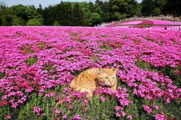 gatto fiori primavera