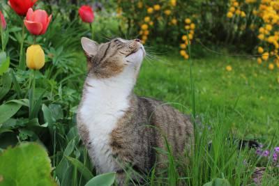 gatto-primavera4