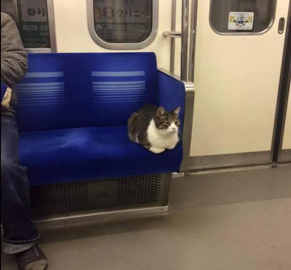 gatto tokyp