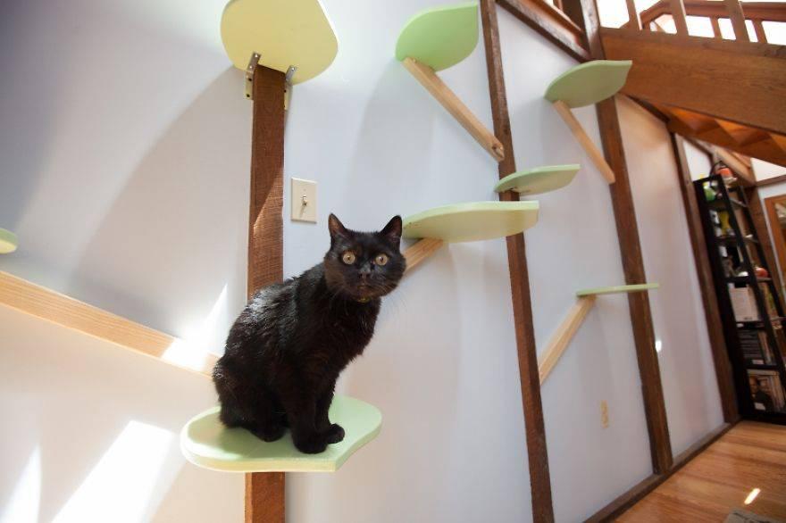 La Casa Ideale Per I Gatti Un Po Di Fantasia E Il Gioco E Fatto