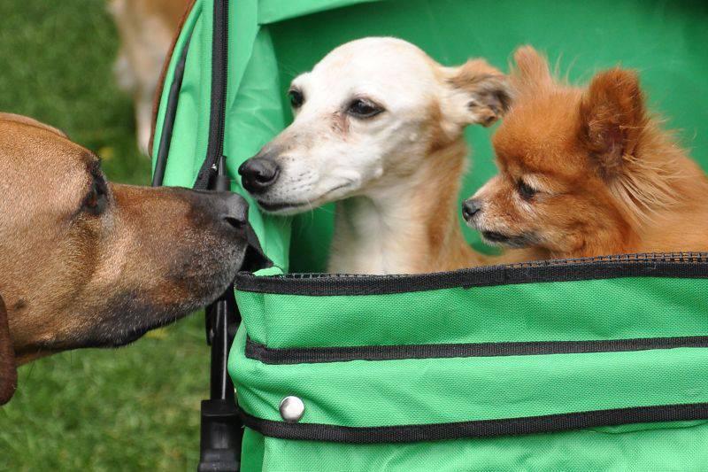 odorato cani 1