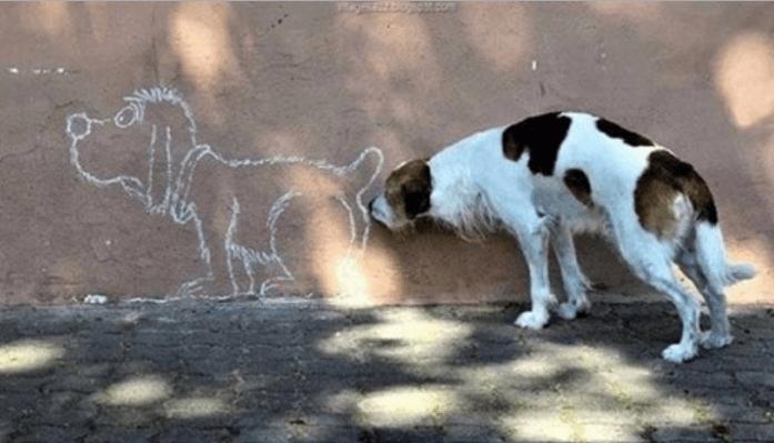 odorato cani