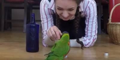 animali parlano