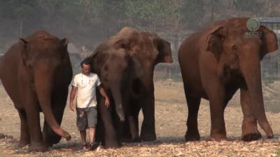 uomo elefanti