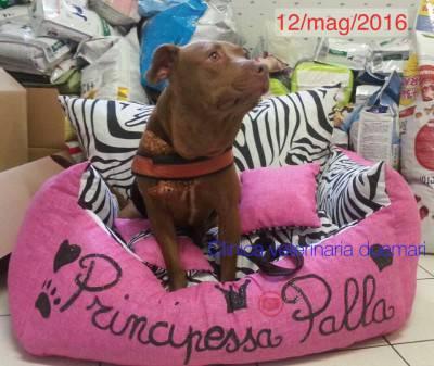 La principessa Palla (Foto Clinica DueMari)