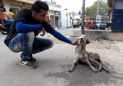 cane abbandonato strada