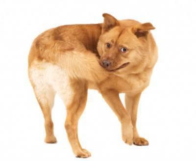 cane coda4