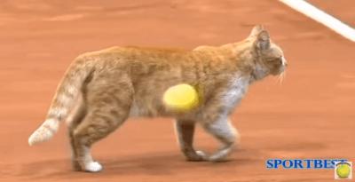 gatto tennis