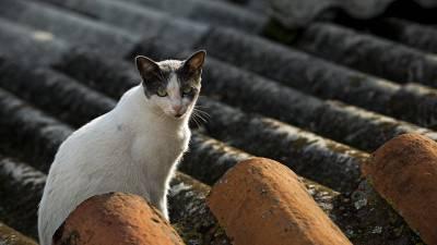 gatto tetto