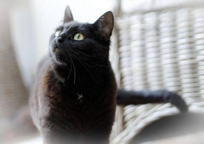 gatto16