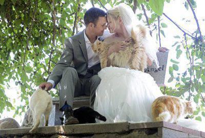 matrimonio gatti