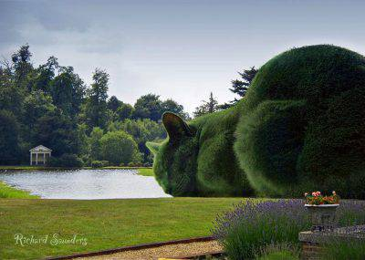 @Facebook The Topiary Cat
