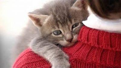 affetto gatto