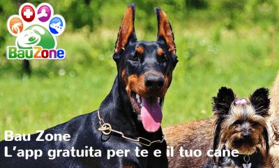 bauzone