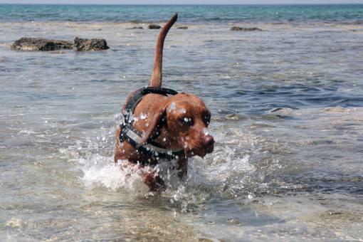 L 39 importanza di nuotare per i cani ecco alcuni consigli for I cani youtube