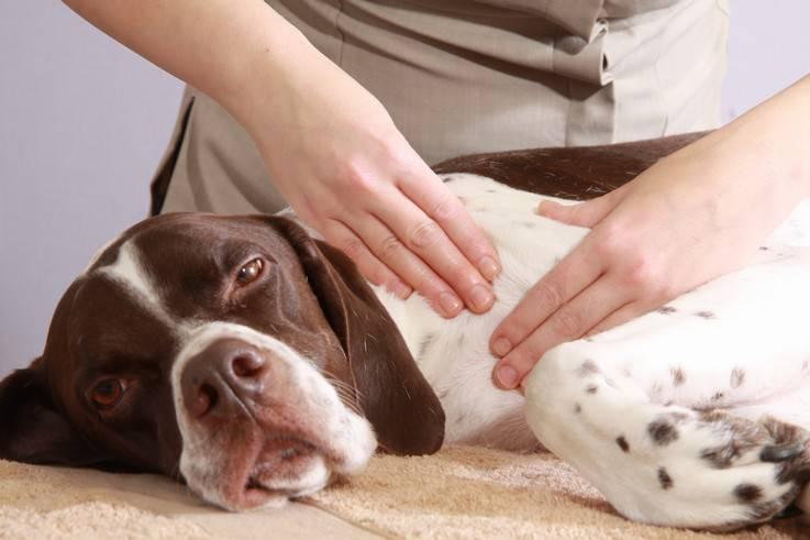 lavorare animali massaggi