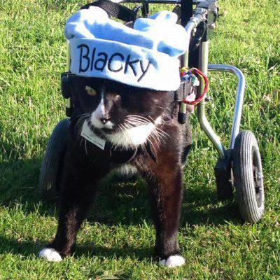 @Facebook Blacky The cat
