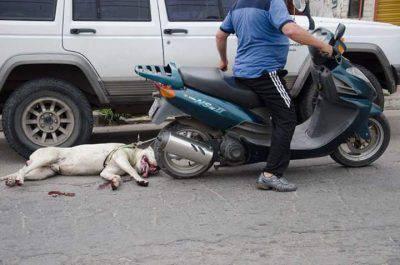 cane morto maltrattato