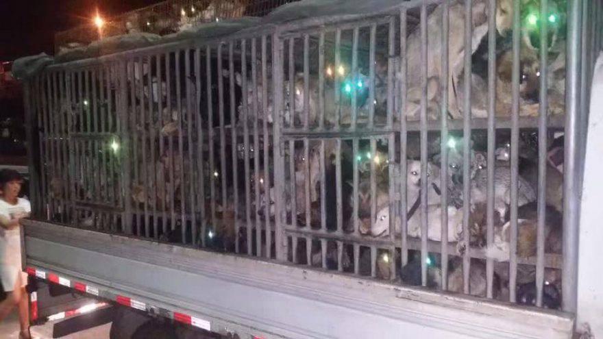 Cina, arriva la petizione contro il Festival della carne di cane