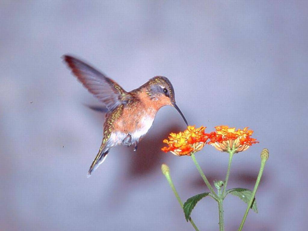 Dal volo dei colibr gli algoritmi per nuovi futuristici - Uccelli che sbattono contro le finestre ...