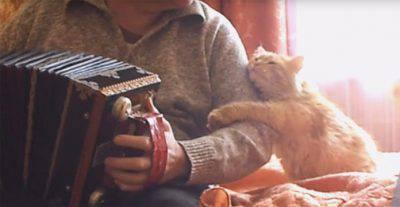 gatto fisarmonica musica