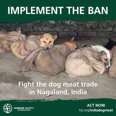 india cani