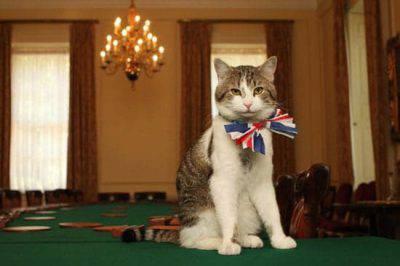 larry gatto cameron