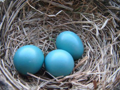 uova blu
