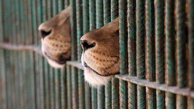 zoo gabbia