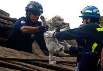 cane terremoto