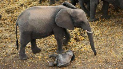 elefante00-kRAB-U10801530162529S9B-1024x576@LaStampa.it