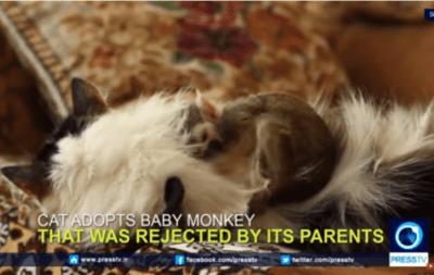 gatto scimmia
