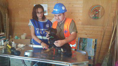 Risultati immagini per Lola cane del terremoto immagini